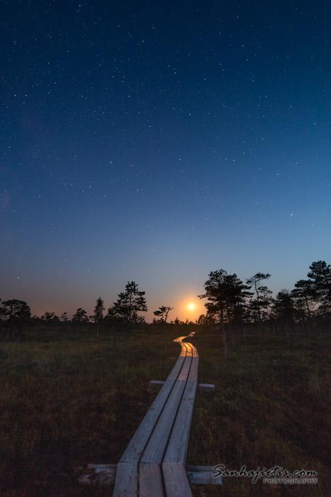 Saulriets Ķemeru nacionalais parka takā