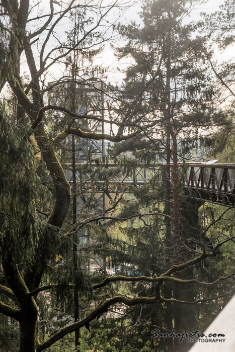 Anīkšči - taka virs koku galotnēm