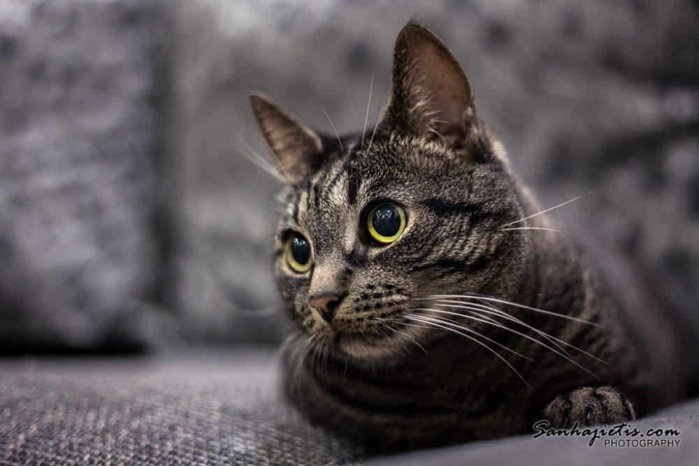 Kaķa fotogrāfija