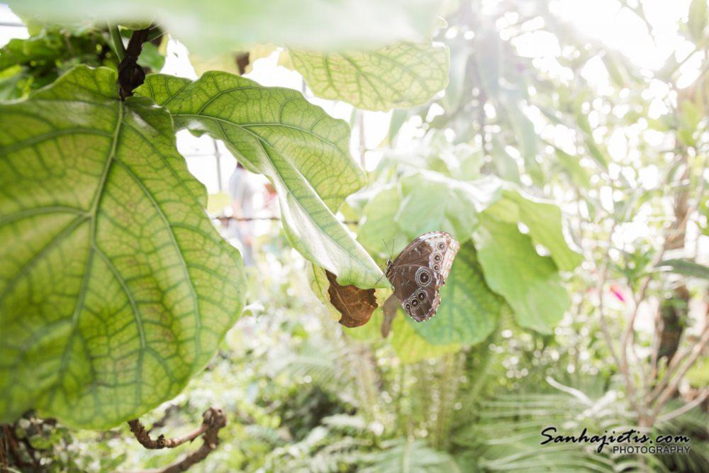 LU botāniskais darzs